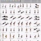 """Dumbbell Workout Chart  18""""x28"""" (45cm/70cm) Poster"""