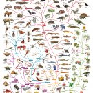 "The Origin of Life Chart  18""x28"" (45cm/70cm) Poster"