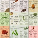 """The Ultimate Infographic Guide to Spices Chart  18""""x28"""" (45cm/70cm) Canvas Print"""