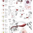 "A Question of Taste Wine Chart 18""x28"" (45cm/70cm) Poster"