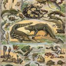 """Different Types of Reptiles Chart  13""""x19"""" (32cm/49cm) Polyester Fabric Poster"""