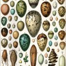 "Different Types of Eggs Chart 13""x19"" (32cm/49cm) Polyester Fabric Poster"