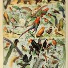 "Different Type of Birds Chart  18""x28"" (45cm/70cm) Canvas Print"