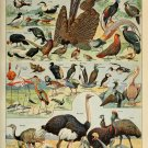 """Different Type of Birds Chart  13""""x19"""" (32cm/49cm) Polyester Fabric Poster"""