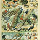 """Different Type of Feather Birds Chart 18""""x28"""" (45cm/70cm) Canvas Print"""