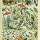"""Different Type of Feather Birds Chart  18""""x28"""" (45cm/70cm) Poster"""
