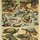 "Different Type of Reptiles Chart  18""x28"" (45cm/70cm) Canvas Print"