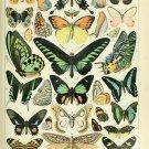 "Different Types of Butterflies Chart  18""x28"" (45cm/70cm) Canvas Print"