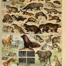 """Different Types of Fur Animals Chart   13""""x19"""" (32cm/49cm) Polyester Fabric Poster"""
