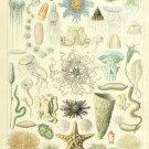 "Oceanography Life Chart 18""x28"" (45cm/70cm) Poster"