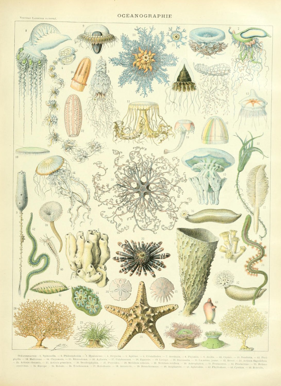 "Oceanography Life Chart  18""x28"" (45cm/70cm) Canvas Print"