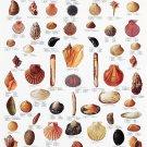 "Scandinavian Fishing Book Chart  18""x28"" (45cm/70cm) Canvas Print"