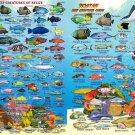 """Coral Reef Creatures of Belize & Roatan Chart  18""""x28"""" (45cm/70cm) Canvas Print"""