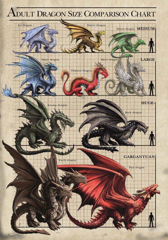 """Adult Dragon Size Comparison Chart  18""""x28"""" (45cm/70cm) Poster"""