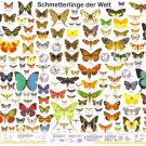 """Butterfly Types Chart 18""""x28"""" (45cm/70cm) Poster"""