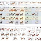 "Guide to Horse colors and patterns Chart  18""x28"" (45cm/70cm) Canvas Print"