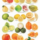 """Different Fruits Citrus Chart  13""""x19"""" (32cm/49cm) Polyester Fabric Poster"""
