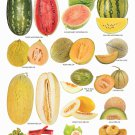 "Different Fruits Melons Chart  18""x28"" (45cm/70cm) Poster"