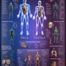 "Human Anatomy Interactive Atlas Chart 13""x19"" (32cm/49cm) Polyester Fabric Poster"