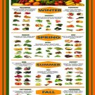 """Guide to Buying Fruits and Vegetables in Season Chart 13""""x19"""" (32cm/49cm) Polyester Fabric Poster"""
