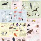 """Drawing Birds Catalogue Infographic  13""""x19"""" (32cm/49cm) Polyester Fabric Poster"""