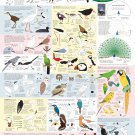 "Drawing Birds Catalogue Infographic  18""x28"" (45cm/70cm) Canvas Print"