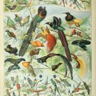"""Different Types of Birds Oiseaux Chart Adolphe Millot 13""""x19"""" (32cm/49cm) Polyester Fabric Poster"""