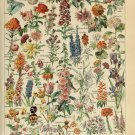 "Different Types of Flowers Fleurs Chart Adolphe Millot 13""x19"" (32cm/49cm) Polyester Fabric Poster"