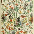 """Different Types of Flowers Fleurs Chart Adolphe Millot 13""""x19"""" (32cm/49cm) Polyester Fabric Poster"""