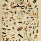 "Different Types of Insects Insectes Chart Adolphe Millot 13""x19"" (32cm/49cm) Polyester Fabric Poster"