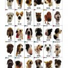 "The Dog Different Dog Breeds Infographic Chart 13""x19"" (32cm/49cm) Polyester Fabric Poster"