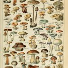 "Different Types of Mushrooms Champignons Adolphe Millot 13""x19"" (32cm/49cm) Polyester Fabric Poster"