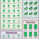 """Identify Plant by Leaf shape Infographic Chart 13""""x19"""" (32cm/49cm) Polyester Fabric Poster"""