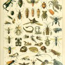 """Different Types of Insects Insectes Chart Adolphe Millot 18""""x28"""" (45cm/70cm) Poster"""