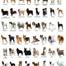"""The Dog Different Dog Breeds Infographic Chart 18""""x28"""" (45cm/70cm) Poster"""