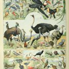 "Different Types of Birds Oiseaux Chart Adolphe Millot 18""x28"" (45cm/70cm) Canvas Print"