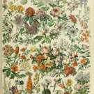 "Different Types of Flowers Fleurs Chart Adolphe Millot 18""x28"" (45cm/70cm) Canvas Print"