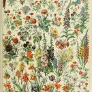 "Different Types of Flowers Fleurs Chart Adolphe Millot 18""x28"" (45cm/70cm) Canvas Print"