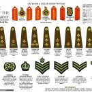 """The Ranks of The British Army Second World War 18""""x28"""" (45cm/70cm) Canvas Print"""