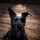"Far Cry 5 Boomer Dog Game 18""x28"" (45cm/70cm) Canvas Print"