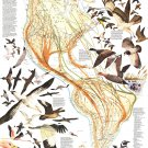 "Bird Migration in the Americas Infographic Chart 18""x28"" (45cm/70cm) Poster"