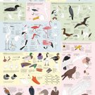 "Drawing Birds Infographic Chart 18""x28"" (45cm/70cm) Poster"