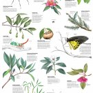 """Country life Insects and Plants Chart 13""""x19"""" (32cm/49cm) Polyester Fabric Poster"""