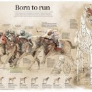 "Hong Kong's Five Richest Races Born to Run Chart 13""x19"" (32cm/49cm) Polyester Fabric Poster"