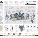 """The Art of Bullfighting Infographic Chart 13""""x19"""" (32cm/49cm) Polyester Fabric Poster"""