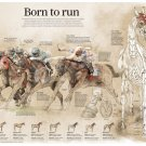"Hong Kong's Five Richest Races Born to Run Chart 18""x28"" (45cm/70cm) Poster"
