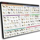 "American Kennel Dog Breeds Club Chart  12""x16"" (30cm/40cm) Canvas Print"
