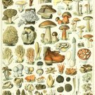 "Champignons Mushrooms Types Chart 13""x19"" (32cm/49cm) Canvas Print"