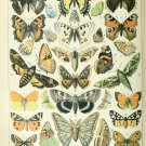 """Different Types of Insects Butterflies Papillon Chart 13""""x19"""" (32cm/49cm) Polyester Fabric Poster"""