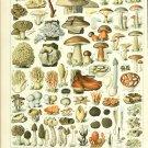 "Different Types of Mushrooms Champignons Adolphe Millot  18""x28"" (45cm/70cm) Poster"